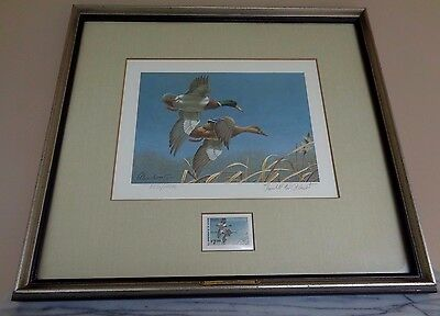 Framed Federal Duck Stamp Print Mallards 1980 Richard Plasschaert