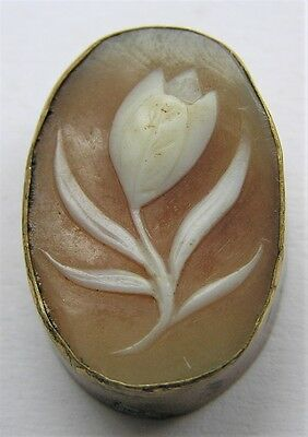 Unmounted Shell Cameo Italy Carved Victorian Flower Framed