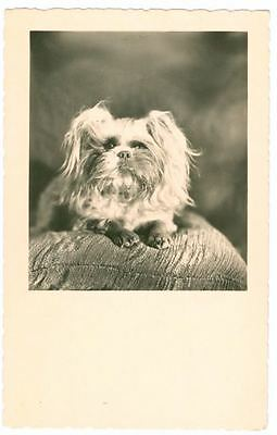 Vintage Amag Personal Photo Postcard PC Pekingese Dog Germany