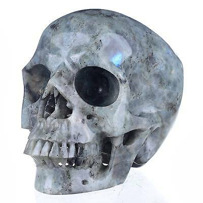 "6.97""Natural Labradorite Hand Carved Skull/Head,Realistic Carving#23L36"