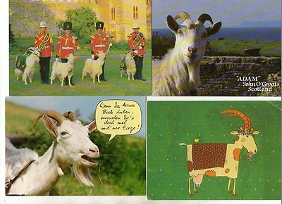 24 postcards of GOATS