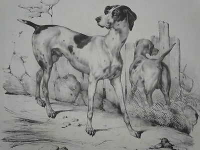 Wachsame Hunde - Zoologie Tiere - V. Adam - Lithographie - 1850