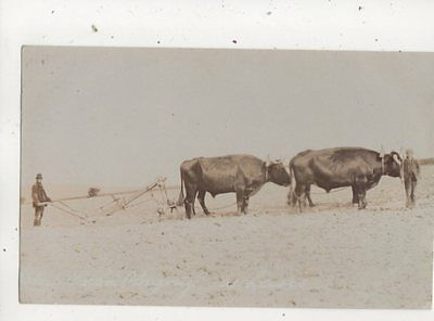 Oxen Ploughing At Lewes Sussex Vintage RP Postcard