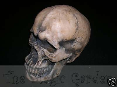 Gothic skull skeleton halloween cement plaster latex moulds molds