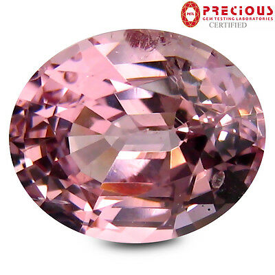 1.53 ct PGTL Certified Magnificent fire Oval Cut (8 x 6 mm) Pink Spinel Gemstone