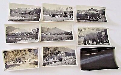 Lot Antique Walter Main Circus Photographs Wagon Elephants & Photo Negatives