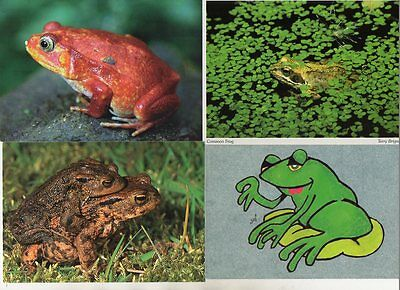 21 postcards of FROGS & TOADS