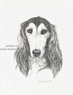 #358 SALUKI  *  dog art print * Pen and ink drawing * Jan Jellins
