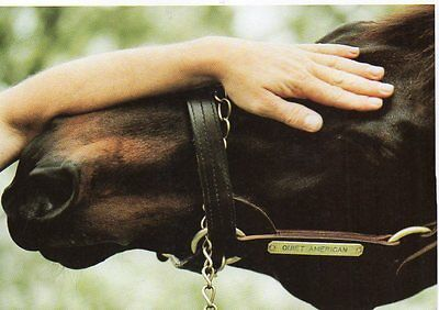 postcard of NAMED RACE HORSE - QUIET AMERICAN