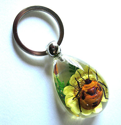 Flower Bug Beetle Insect Glass Square Clear Background Keychain Gift