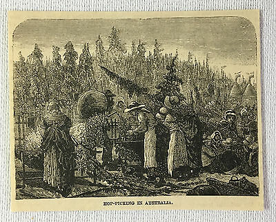 small 1884 magazine engraving ~ HOP-PICKING IN AUSTRALIA