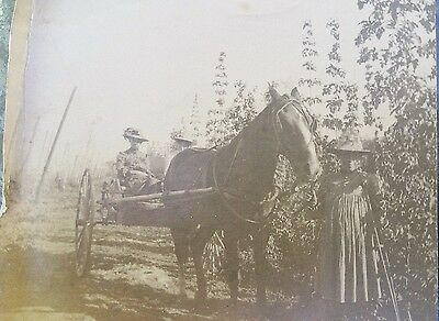 Antique Original Photo  HORSE & BUGGY with WOMAN