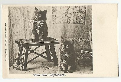 po animals cat cats kittens pets postcard animal england