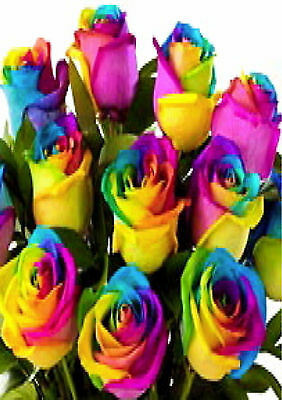 15 Mixed Colored Rose Seeds -Vaiety of Colors