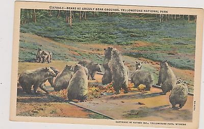 Grizzly Bear Grounds-Yellowstone Park Post Card. Unused