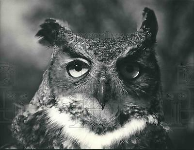 1986 Press Photo Horned Owl before release from Milwaukee Wildlife Rehab Center.