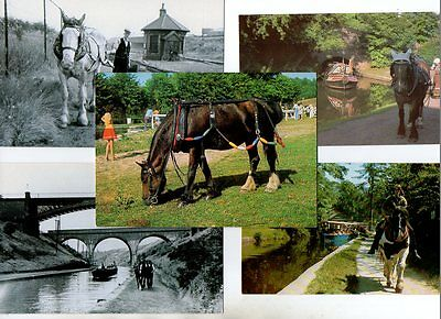 5 postcards of CANAL BOAT HORSES