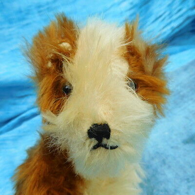 Dear vintage dog Molly Steiff old toy jointed neck vgc glass painted back eyes