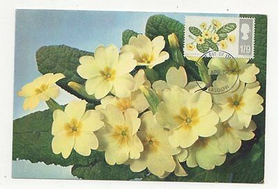 Primrose 1967 First Day of Issue Postcard 254a