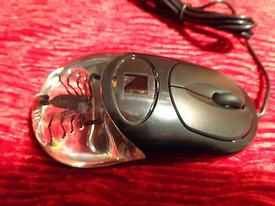 Black Scorpion Computer Mouse Real Specimen New