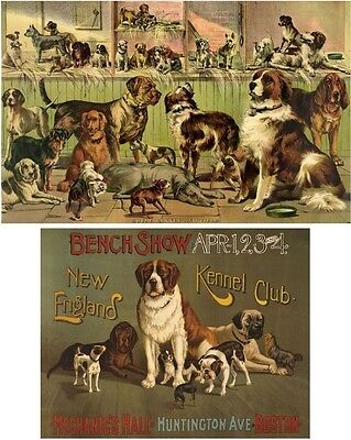 Set 2 1890s Dog Animal Decor Art New Prints Multi Breeds Toy Hunting Field P45