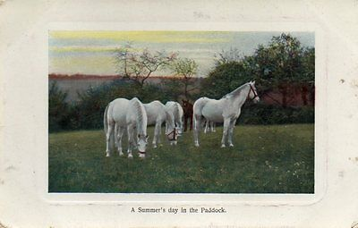 VINTAGE postcard of WHITE HORSES - A SUMMER'S DAY IN THE PADDOCK 1913