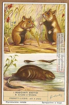 Hamster and Muskrat 60+ Y/O Trade Ad Card