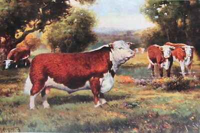 Bull and Cows by R Atkinson Fox vintage art