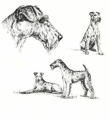 Irish Terrier - 1963 Vintage Dog Print - Matted