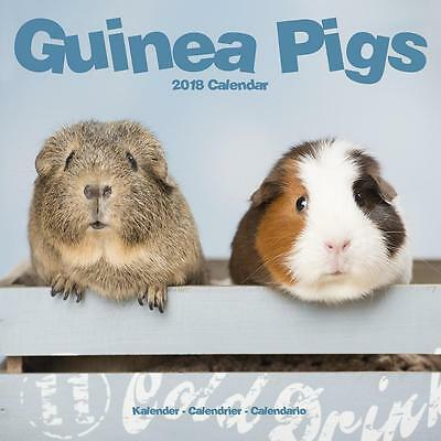 Guinea Pigs 2018 Calendar 15% OFF MULTI ORDERS!