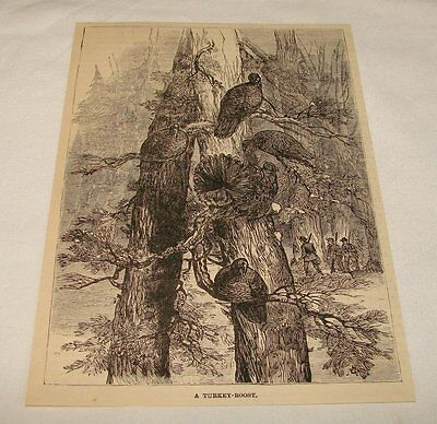 1885 magazine engraving ~ A TURKEY-ROOST