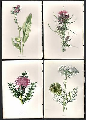 Lot of 4 Original c1897 Colored Wildflower Prints By Hulme 1