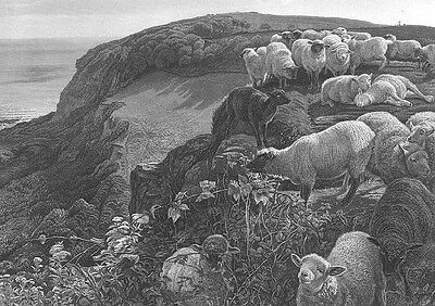 SHEEP ON CLIFFS HILL by OCEAN SEA SHORE, 1877 Pre-Raphaelite Art Print Engraving