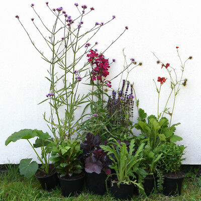 Mixed Established Garden Shrub Potted Plants Lucky Dip 10 x 1 Litre Plant T&M