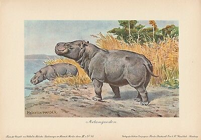 Metamynodon Urzeittiere CHROMOLITHOGRAPHIE um 1900 Heinrich Harder