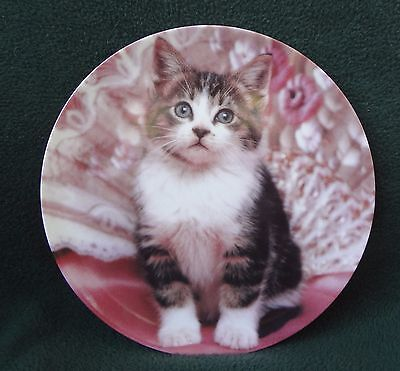 "KITTEN CAT COLLECTOR PLATE !Perfectly Posed"" 1993 Crestley Collection"
