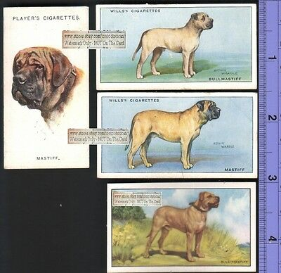 Bullmastiff Dogs 4 Different 75+ Y/O Ad Trade Cards