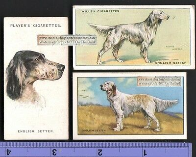 English Setter Dogs 3 Different 75+ Y/O Ad Trade Cards