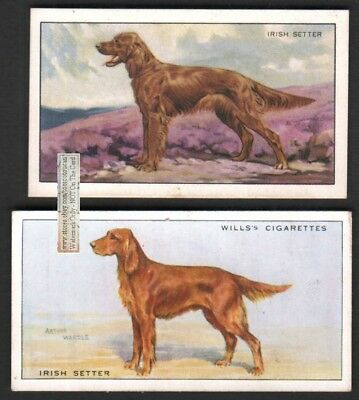 Irish Setter Dogs 2 Different 75+ Y/O Ad Trade Cards