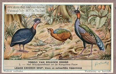 Forest Guinea Fowl and Congo  Peacock  50+ Y/O Trade Ad Card m