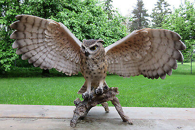 EAGLE OWL FIGURINE WINGS OUT HOOTER STATUE WISE OLD OWL resin MULTI-COLORED NEW
