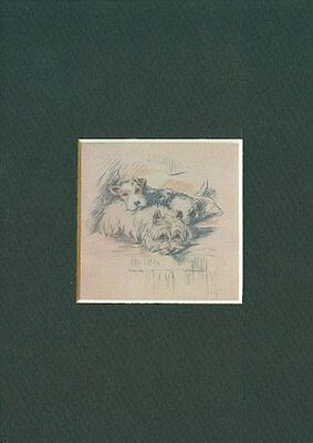 -- West Highland Terrier Dog Print - Dawson CLEARANCE