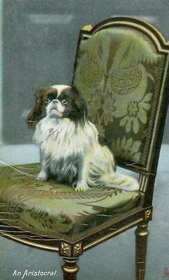 RARE Old Tuck's  Postcard PC Japanese Chin Dog England c1910