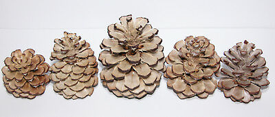"""Lot of 12 - Bleached Treated PONDEROSA PINE CONES White ASSORTED SIZES 2"""" - 4.5"""""""