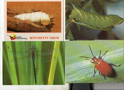 26 postcards of INSECTS & OTHER CREEPY CRAWLIES