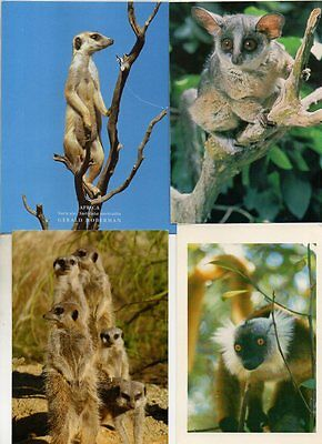 20 postcards of MEERKATS LEMURS & BUSH BABY
