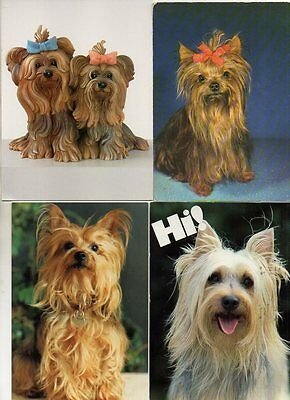 6 postcards of YORKSHIRE TERRIER DOGS