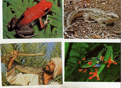 29 postcards of AMPHIBIANS & REPTILES SNAKES FROGS LIZARDS