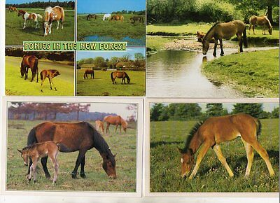40 postcards of NEW FOREST PONIES horses