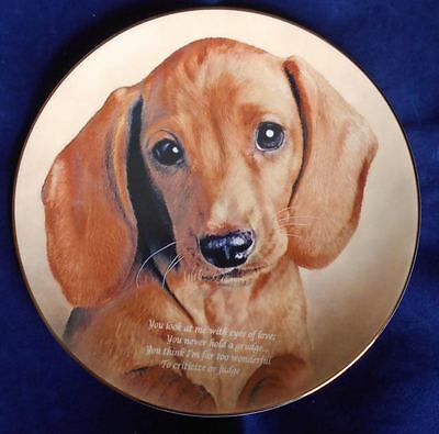 Vintage Danbury Mint Eyes of Love Dachshund Plate Dog Lim Ed EXCELLENT!